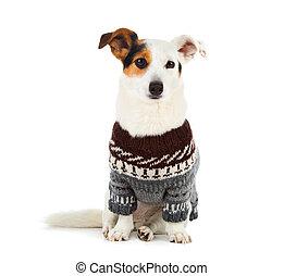suéter, russell, gato, sentado