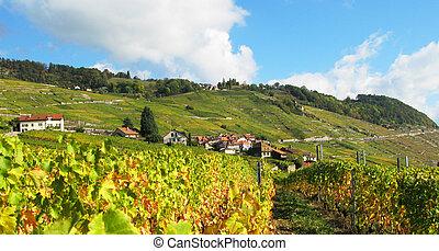 suíça, famosos, vinhedos, lavaux, região