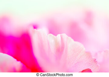 su, garofano, chiudere, rosa
