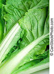 su, sfondo verde, verdura, chiudere, bianco
