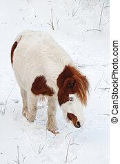 su, uno, freddo, inverno, giorno, in, bello, pascolo cavalli
