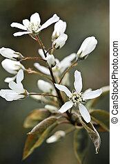 suave, flores brancas, primavera