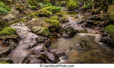 suave, floresta, riacho