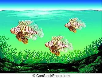 subacqueo, fish, nuoto, scena, tre