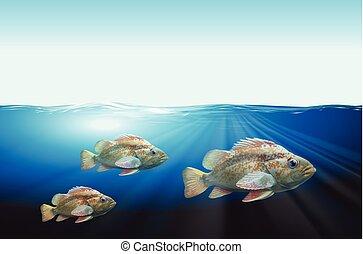 subacqueo, fish, tre, scena