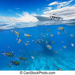 subacqueo, orizzonte, corallo, superficie, acqua, scogliera
