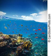 subacqueo, scogliera, corallo, acqua, orizzonte, onde