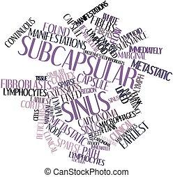 subcapsular, sinus