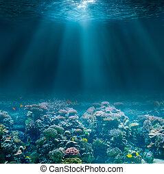 submarinas, coral, oceânicos, seabed, mar, vista., ou, reef.