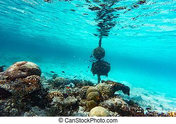 submarinas, maldives., coral, oceano índico, peixe recife