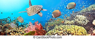 submarinas, panorama