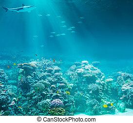 submarinas, tubarão, mar, coral, oceânicos, recife, ou