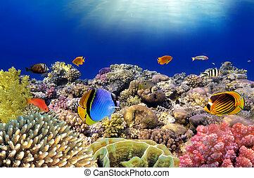 submarinas, world., coral, peixes, de, vermelho, sea., egito