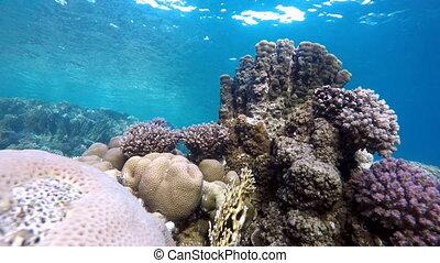 Submarine life. Beautiful coral ree