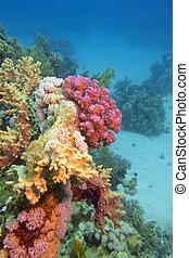 submarino, arrecife, colorido, fondo, coral, -, tropical, ...