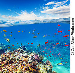 submarino, arrecife, coral, agua, horizonte, ondas