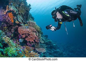 submarino, arrecife, scape