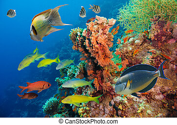 submarino, barrera coralina, colorido, esponjas