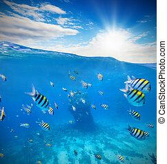 submarino, barrera coralina, con, horizonte, y, agua, ondas