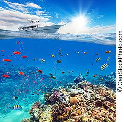 submarino, barrera coralina, con, horizonte, y, superficie del agua