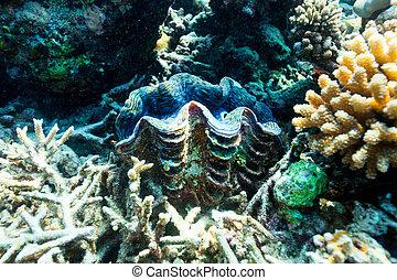 submarino, barrera coralina