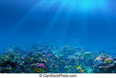 submarino, barrera coralina, plano de fondo