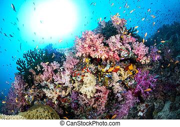submarino, colorido, arrecife