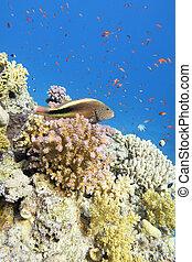 submarino, colorido, coral, paisaje, hawkfish, mar, peces ...