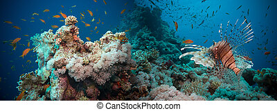 submarino, coral, lionfish, arrecife