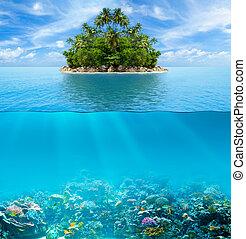 submarino, coral, superficie del agua, tropical, fondo del...