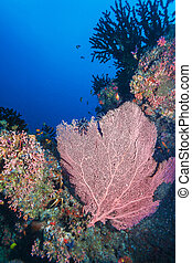 submarino, coral, ventilador, rojo, paisaje
