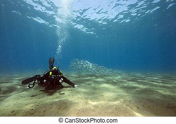 submarino, fotógrafo, y, océano