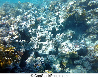 submarino, imágenes, en, un, arrecife, endeudado, mar, de, egipto