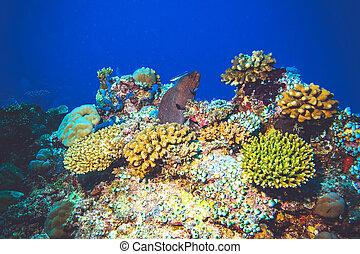 submarino, imagen, anguila, pez, moray