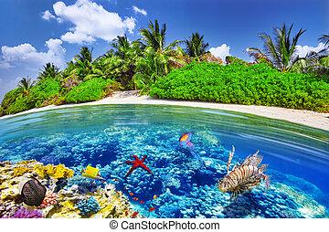 submarino, island., maldives., isla, thoddoo, tropical, ...