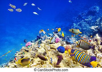 submarino, mundo, con, corales, y, tropical, fish.