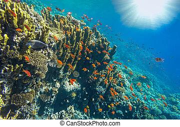 submarino, paisaje, mar rojo, egipto