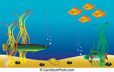 submarino, paisaje, -, pez, y, alga