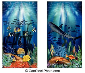 submarino, tropical, banderas, con, tiburón, vector, ilustración