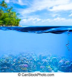 submarino, tropical, mar, con, superficie del agua, plano de fondo