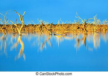 submergé, arbres