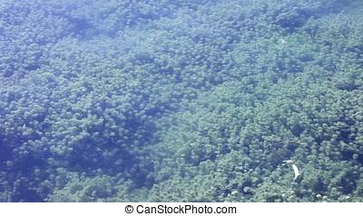 Submerged Aquatic Vegetation to Sun Shining Pan Shot -...