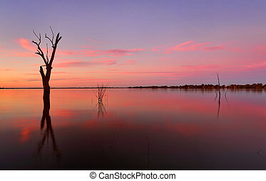 Submerged trees in a lake at sunset