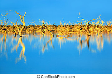 Trees submerged in man-made lake, in glorious sunset light. Menindee, outback New South Wales, Australia.