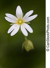 White flower macro