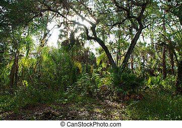 subtropical, encima, sunrising, bosque