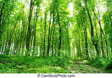 subtropicale, foresta