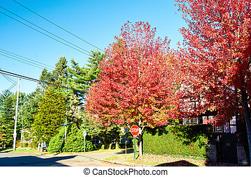 Suburban neighborhood in autumn