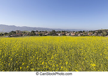 Mustard flower spring meadow in suburban Simi Valley near Los Angeles, California.