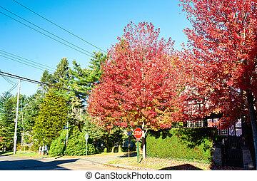 suburbano, vecindad, en, otoño